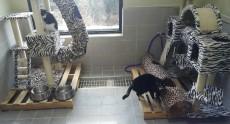 당진시동물보호소